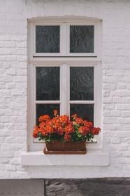 窗户盆栽花卉图片