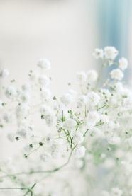 白色小清新花朵圖片