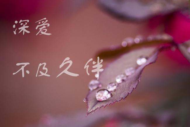 藏红花有什么功效_藏红花的功效有哪些