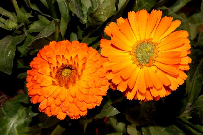 「毛线编织」花朵图案的钩织方法